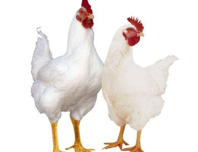 Инкубаторы по виду птиц-существ
